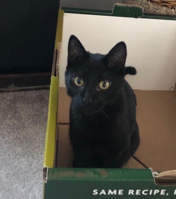 Shadow - Kitten in a box