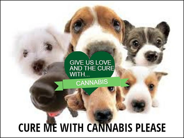 Medical-Cannabis-for-Pets