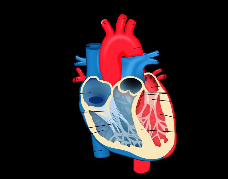 Is-Marijuana-Safe-for-the-Heart?