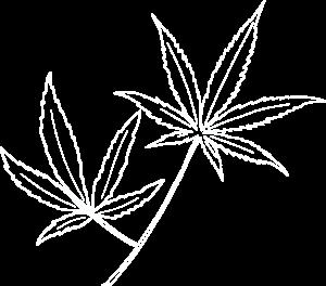 Leaves-r-white